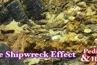 Pedigrees & Hoards: Shipwreck Coins