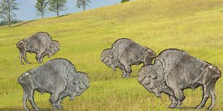Classic US Coins – You Can't Roller-Skate In This Buffalo Herd