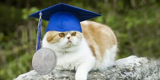 American Numismatic Association Awards College ANA Scholarships