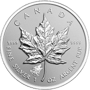 2016 Canadian Silver Maple