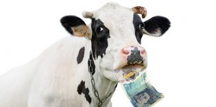 Controversy Over Animal Fat Used to Manufacture New UK 5 Pound Note